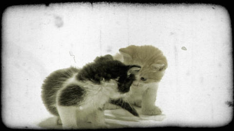 Two kittens play. Vintage stylized video clip Footage
