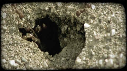 Worker ants at hole. Vintage stylized video clip Live Action