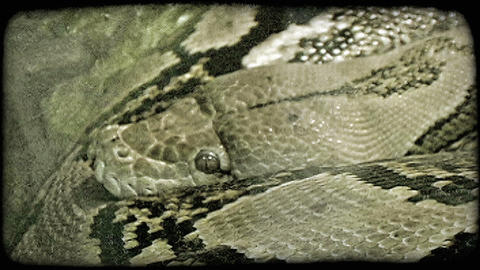 Snake rests. Vintage stylized video clip Footage