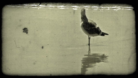Seagull stands on beach. Vintage stylized video clip Footage