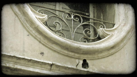 Pigeon on Building. Vintage stylized video clip Footage