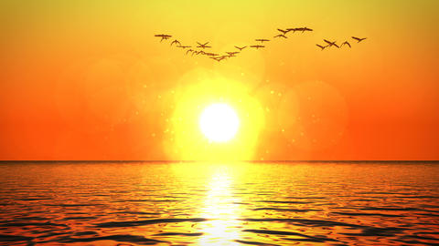 Flock of geese flying above ocean towards sunset GIF