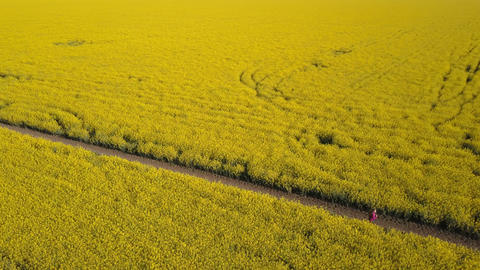 Pretty purposeful girl running on the path among yellow rape fields - aerial ビデオ