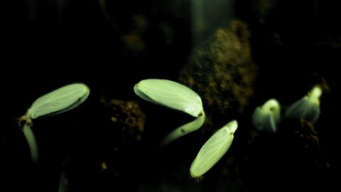 Growing Plants Timelapse Sprouts Germination. Futuristic style Live Action