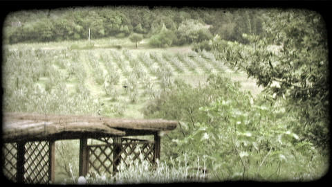 Italian Orchard 3. Vintage stylized video clip Footage