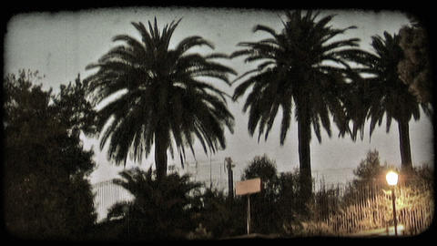 Palm Trees. Vintage stylized video clip ビデオ