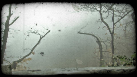 Small, bare trees and mist. Vintage stylized video clip Footage