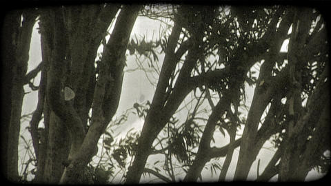 Dark trees and sky. Vintage stylized video clip Footage