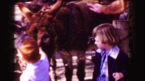 1967: Kids petting zoo hairy mule donkey horse like beast Live Action