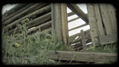 Flower and cabin. Vintage stylized video clip ライブ動画