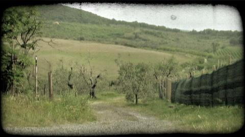 Gravel Path 1. Vintage stylized video clip Footage