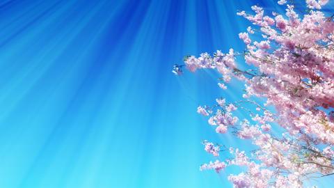 [alt video] Sakura Tree And Dreamy Sky
