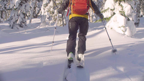 Skitour in Siberia. Man's legs skiing in a snowy forest Live Action