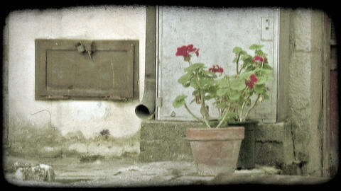 Flower Pot. Vintage stylized video clip Live Action