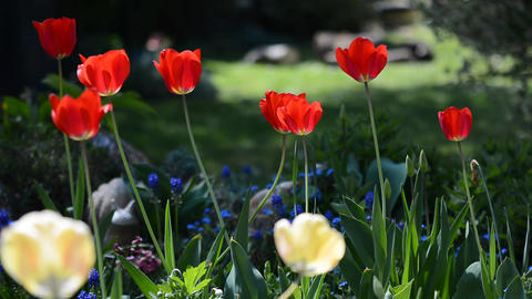 Spring garden Footage