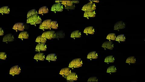 Deep swimming fish Animation