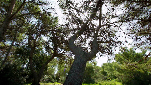 Stock Footage of sunshine through forest branches in Israel Footage