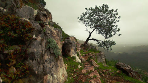 Stock Footage of a lone tree on a rocky mountainside in Israel Footage