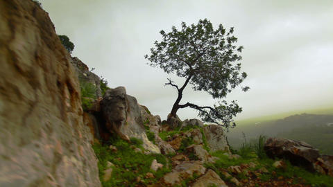 Stock Footage of a lone tree on a windy hillside in Israel Footage