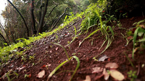Stock Footage of a green and brown hillside floor in Iyon Tanur in Israel Footage