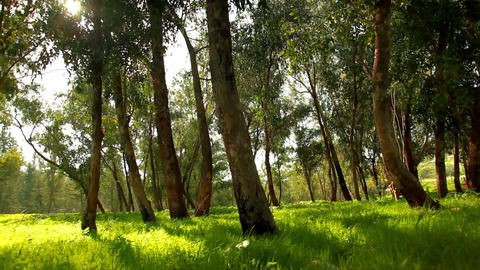 Stock Footage of a grassy forest floor in Israel Footage