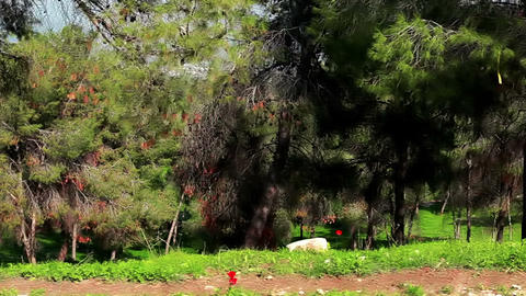 Stock Footage drive-by of forest trees in Israel Footage