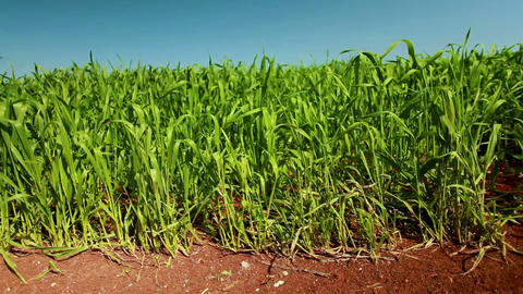 Stock Footage of a lush green field in Israel Footage