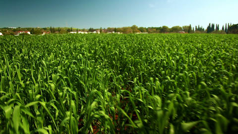 Stock Footage of lush green crops in Israel Footage