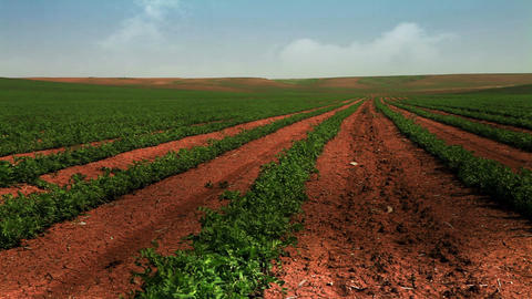 Stock Footage of green rows of crops in Israel Footage