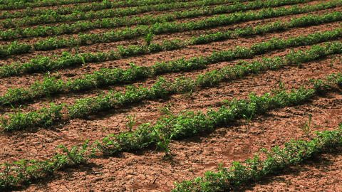 Stock Footage of rows of crops in Israel Footage