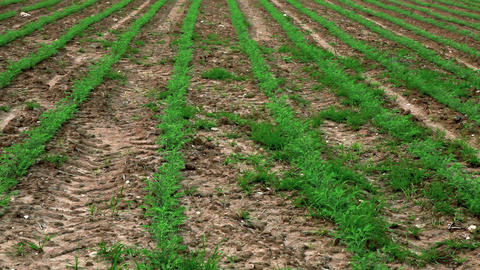 Stock Footage of lines of crops in a field in Israel Footage