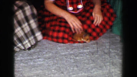 1958: Girls playing with new hamster pet in plaid wool skirts Footage