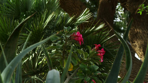 Royalty Free Stock Video Footage of interesting flora shot in Israel at 4k with  Footage