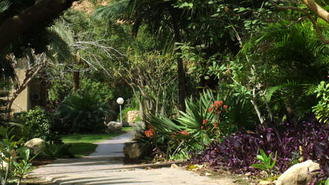 Royalty Free Stock Video Footage of vegetated oasis pathway shot in Israel at 4k Footage