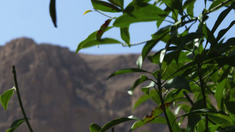 Royalty Free Stock Video Footage of blowing branches in the desert shot in Israe Footage