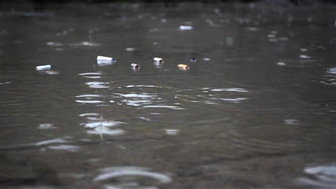 Raindrops falling in a puddle in which discarded cigarette butts more 17 Footage