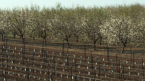Royalty Free Stock Video Footage of almond orchards shot in Israel at 4k with Re Footage