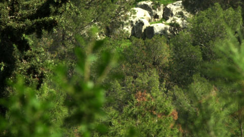 Royalty Free Stock Video Footage of forest trees shot in Israel at 4k with Red Footage