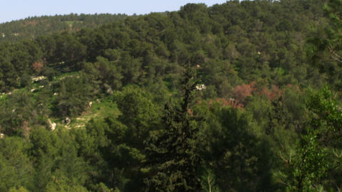 Royalty Free Stock Video Footage of a forested mountainside shot in Israel at 4k Footage