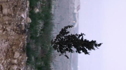 Royalty Free Stock Video Footage of a lone tree shot in Israel at 4k with Red Live Action