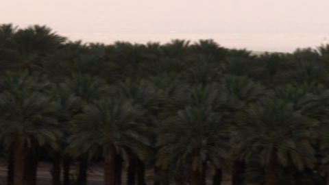 Stock Video Footage panorama of a palm grove at the Dead Sea shot in Israel at 4 Live Action