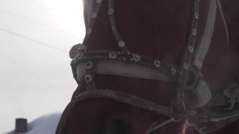 Close up horse!Funny breaths into the camera. Horse face large. Winter Footage