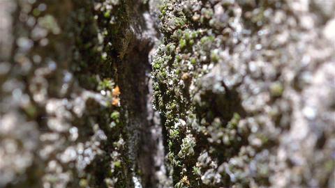 Swarm Of Ants Walking Inside A Tree Footage
