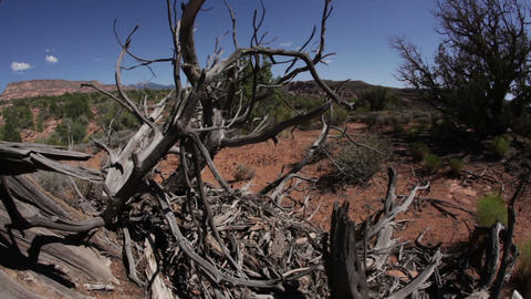 Scraggly Branches Against a Moab Vista Footage