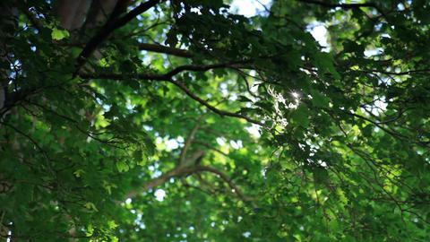 Tracking shot of trees in Copenhagen, Denmark Footage