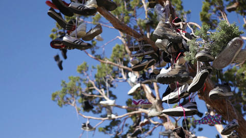 Lots of shoes hung in a tree Footage
