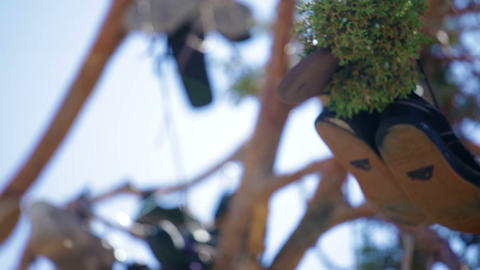 A few pairs of shoes hanging in a tree Footage
