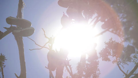 Sun behind branches of shoe tree Footage