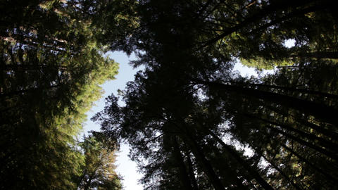 Time-lapse of a forest canopy while driving Footage