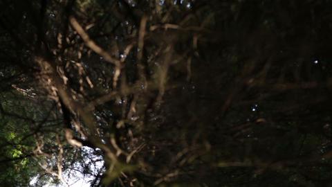 Barren branch in pine forest Footage